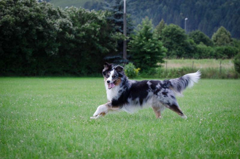 discdog-1
