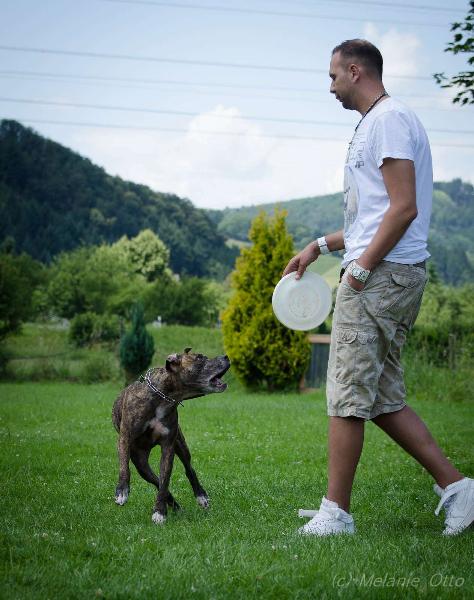 discdog-2