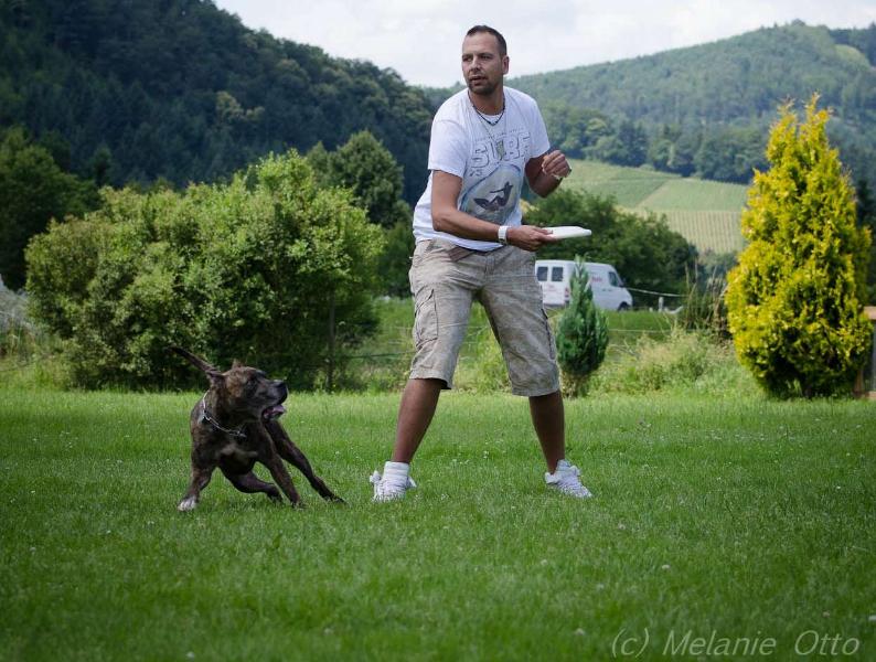 discdog-3