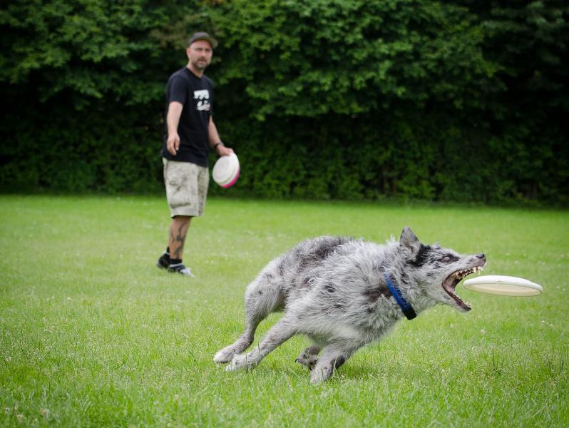 discdog-33