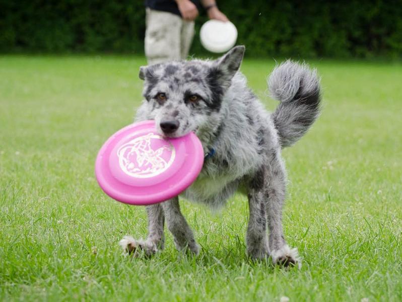 discdog-34