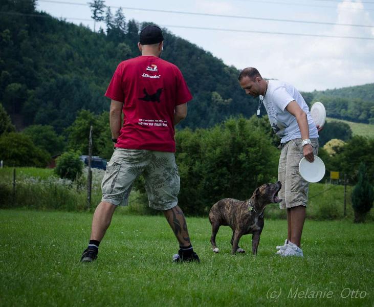 discdog-4