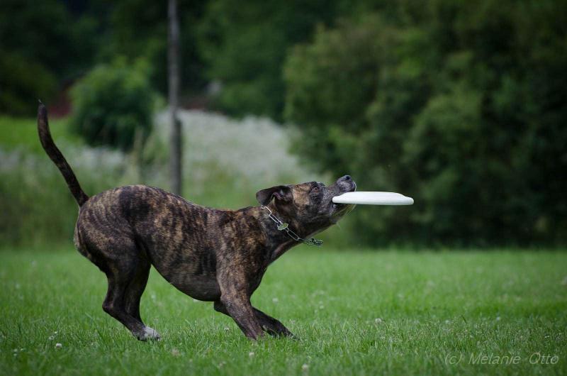 discdog-5