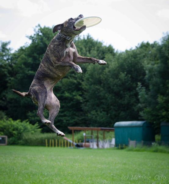 discdog-7