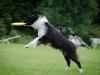 discdog-41