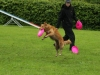 discdog-seminar-juni-2013-002